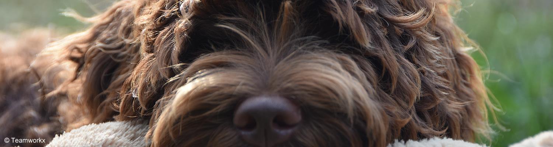 Therapie met hond - Teamworkx vaktherapie en training